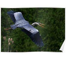 The Grey Heron Poster
