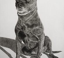Old American Staffordshire Terrier Mix by Istvan Natart