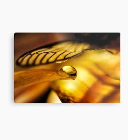 Will You Still Know Me Metal Print