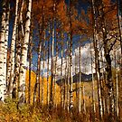 Through the Aspen by Kirstyshots