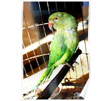 Parrot in Cage Poster