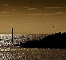 Reflections - Print in sepia by Mark Podger