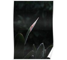 Wet flower 7016 Poster