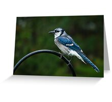 Blue Jay in the Garden Greeting Card
