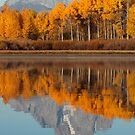 Aspen Grove Aflame At The Oxbow by A.M. Ruttle