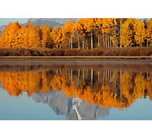 Aspen Grove Aflame At The Oxbow Photographic Print
