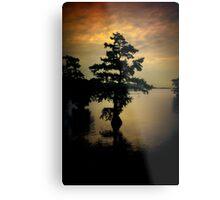 Cypress Tree Metal Print