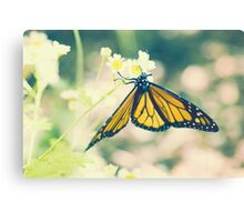 Monarch Butterfly on Daisy Canvas Print