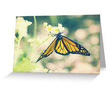 Monarch Butterfly on Daisy Greeting Card