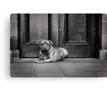 Dogue de Bordeaux Canvas Print