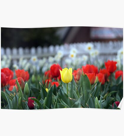 Springtime 2010 - 15 Poster