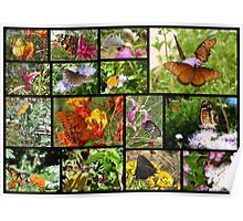 Butterflies in Arizona ~ Poster Poster