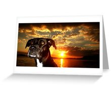 great evening with the pups Greeting Card