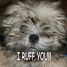 I ruff you , I love you by Sheila McCrea