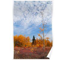 Autumn sky Poster