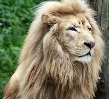 King of the Jungle by Sharon Meyer