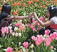 Tulip Tourists by Greg Carrick
