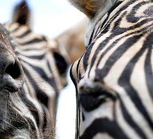 Yo, Zebra! by Jessica Alpern