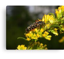 Got pollen? Canvas Print