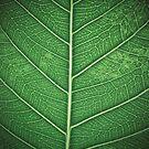 Leaf by lokanin