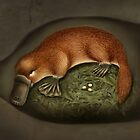Platypus Life Cycle - Mother Lays Eggs by Karen  Hull