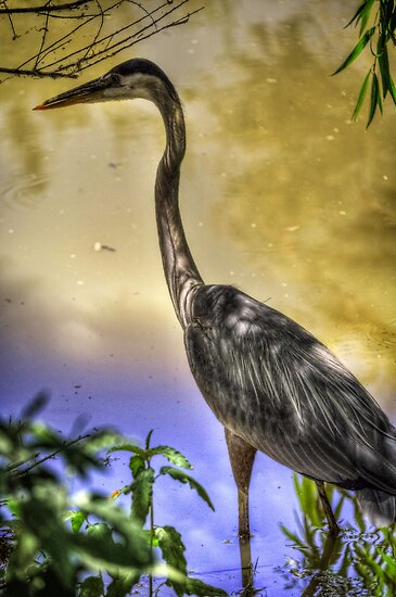 Great Heron  by Saija  Lehtonen