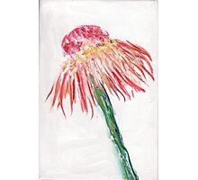 Wild flower 2 Photographic Print