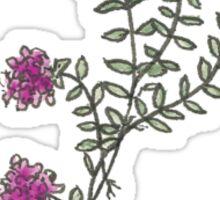 Thyme Sticker