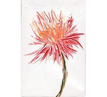 Wild flower 3 Photographic Print