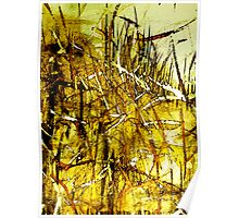 dried golden grass.....city fields Poster