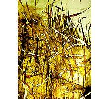 dried golden grass.....city fields Photographic Print