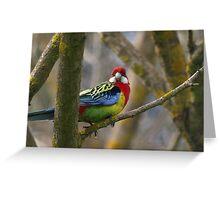 Eastern Rosella Parrot  -  Australia Greeting Card