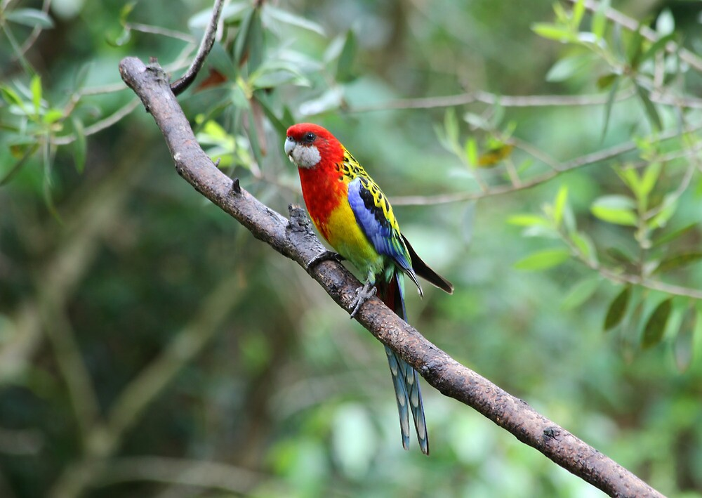 Pretty, Pretty Parrot by byronbackyard