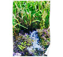 water source Poster