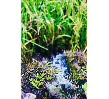 water source Photographic Print