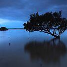 Muddy Waters by Donovan Wilson