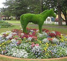 Horse topery, Toowoomba carnival of flowers. by Marilyn Baldey
