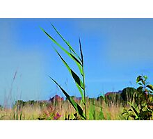 A Single Blade  of Grass. Photographic Print