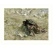 Feeling a little crabby Art Print