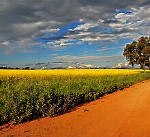 Fields of Yellow, Roads of Red by bazcelt