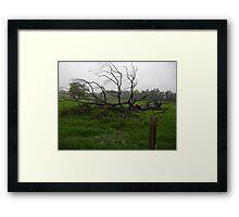 THE OLD TREE IN HEAVY RAIN Framed Print