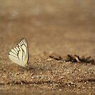 White Butterfly by aka-sakabato