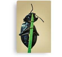 Hidden Beetle Canvas Print