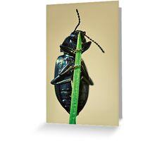 Hidden Beetle Greeting Card