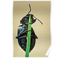 Hidden Beetle Poster