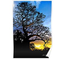 Boab Tree, Derby Poster
