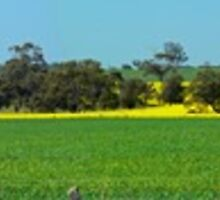Fields of Green and Gold. Spring in the outback. by Neil Mouat
