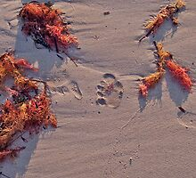 Footprint fun... by Teacup