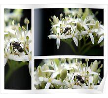 Ants Triplet Poster