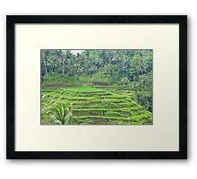 Ubud Ricefields Framed Print